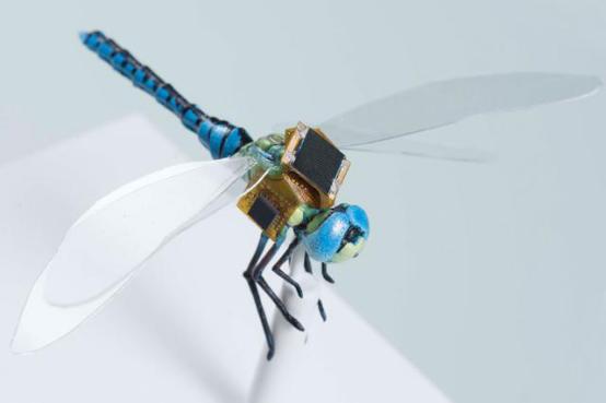 蜻蜓有了它,也能授粉啦