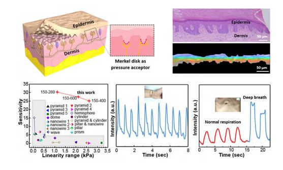 近年来,柔性力学微纳传感器特别是在人体生理信息监测和检测方面成为学术界的研究热点,同时也有大量相关产业公司相继成立。