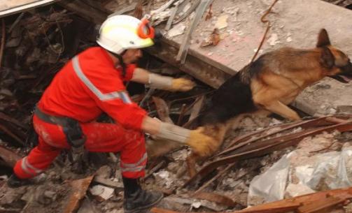 """据报道,奥地利、瑞士和塞浦路斯的研究人员正在研制一种传感器,能够在地震后""""嗅出""""废墟下人的生命特征。多年来,搜救犬一直在执行搜救任务,它们嗅觉灵敏能够识别人体气味,并带领救援人员找到受困者。"""