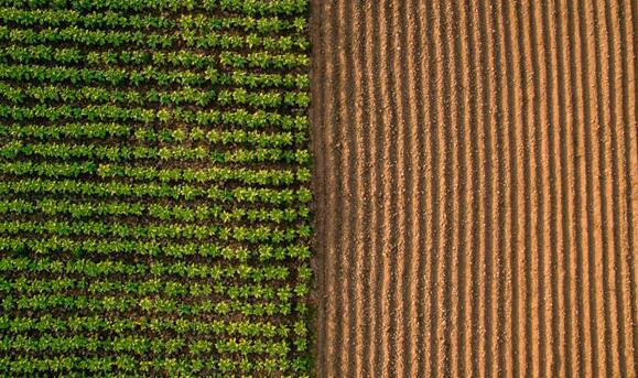 Miao博士和他的团队一直致力于研究如何有效地管理氮肥在农业中的合理运用。在通过对几种不同的氮肥管理方法进行试验比较后,研究人员发现,基于主动农作物冠层的光传感器是最有效的氮肥管理方法。>