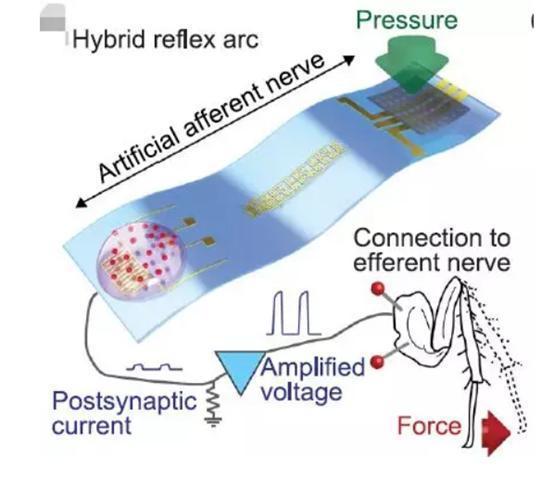 柔性电子,传感器